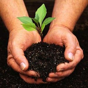 cover-gardening